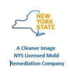 Mold Remediation, Removal Rochester NY, Mold Cleanup